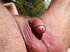ball tanning fly tickles by balls